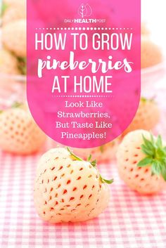 How To Grow Pineberries At Home (They Look Like Strawberries, But Taste Like Pineapples!) via /dailyhealthpost/