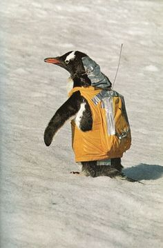 tracker penguin in a parka. with duct tape.