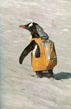 Never trust penguins