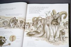 The Wildlife of Star Wars by Parka81, via Flickr Terryl Whitlatch, Star Wars Planets, Avatar World, Western World, Field Guide, Creature Design, Book Review, Aliens, Monsters
