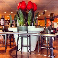 Tullip Restaurant in Amsterdam Airport