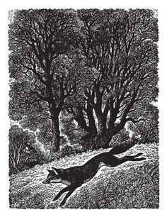 News from Slightly Foxed: The Dashing Fox Linocut Prints, Art Prints, Block Prints, Gravure Photo, Tree Artwork, Fox Art, Black And White Illustration, Wood Engraving, Medieval