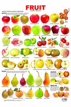 fruits, English vocabulary