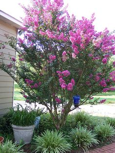 A small crepe myrtle tree would be so pretty in the front yard Florida Landscaping, Home Landscaping, Landscaping With Rocks, Front Yard Landscaping, Crepe Myrtle Landscaping, Southern Landscaping, House Landscape, Landscape Design, Gardens