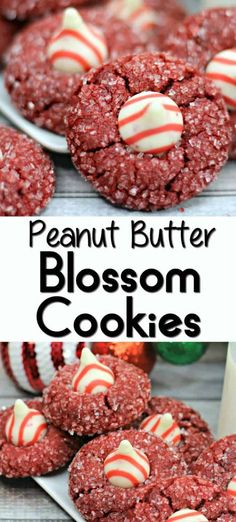 The Best Cookie Recipes {EVER!}