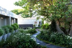 Beautiful side yard lushly planted with 6 planted containers. Jet-black Garden Designed by Mary Maurel Landscape Design, Garden Design, Concrete Pathway, Oak Avenue, Brick Detail, Black Garden, Garden Types, Contemporary Garden, Private Garden