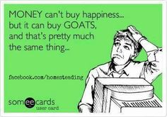 Goats are pure happiness!   Geiten zijn gewoon puur geluk!