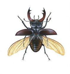 תוצאת תמונה עבור insect illustration