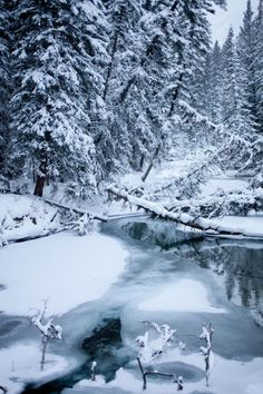 Winter Wedding in the Canadian Rockies Canadian Forest, Canadian Winter, Canadian Rockies, Snow In Summer, Forest Photography, Magic Forest, Winter Beauty, Winter Pictures, Cozy Christmas