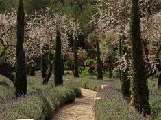 Mashamba Garden Design   Flor de Caña