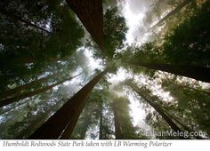 California Redwoods. Been there and its ahhhmazing :)