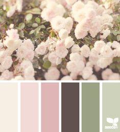 36 ideas for shabby chic colors scheme design seeds Design Seeds, Shabby Chic Colors, Color Schemes Design, Colour Pallette, World Of Color, Color Swatches, Color Theory, House Colors, Color Inspiration