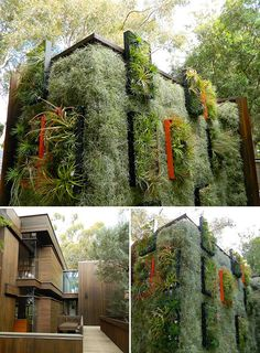 Flora Grubb's air plants used in vertical garden design Green Architecture, Sustainable Architecture, Landscape Architecture, Landscape Design, Garden Design, Vertikal Garden, Vertical Green Wall, Green Facade, Green Roofs