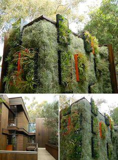 Me encanta la solución y la combinación de colores naturales, verdes y muy naturales..... Airplantman garden wall design
