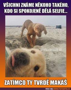 Dog Memes Of The Day 32 Pics – … Hundememes Des Tages 32 Bilder – – Schöne Tierwelt Cute Animal Memes, Cute Funny Animals, Funny Animal Pictures, Cute Baby Animals, Funny Cute, Cute Pictures, Funny Dog Memes, Cat Memes, Funny Dogs