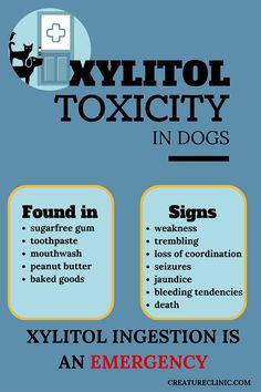 xylitol toxicity in dogs