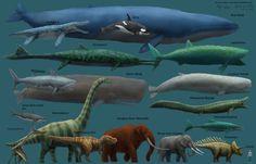 Megafauna Size Comparison
