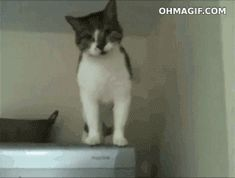 cat walks down refrigerator .gif