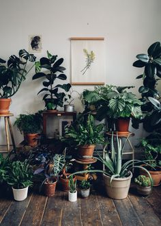 Botanical boho inspiration. Dreaming of a space filled with plants.