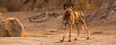 Limpopo-Lipadi Private Game Reserve