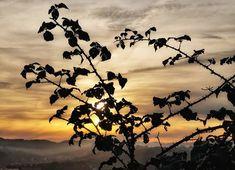 Asturias. . . . . . . . . . . #places #lugares #asturias #winter #invierno #sunset #puestadesol #sky #cielo #clouds #cloudporn #HuaweiMate20Pro @huaweimobileesp #color #colores #navidad Instagram, Sunsets, Sky, Winter, Xmas, Places, Colors