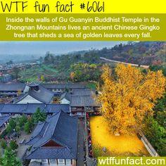 Gu Guanyin Buddhist Temple - WTF fun facts
