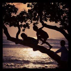 Keiki tree at pine trees surf spot on Hawaii island.  That's how we grow kids here.