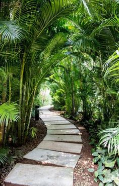 3 Plentiful Cool Tips: Tropical Garden Landscaping Palms modern garden landscapi., garden tropical 3 Plentiful Cool Tips: Tropical Garden Landscaping Palms modern garden landscapi. Tropical Backyard Landscaping, Tropical Garden Design, Landscaping Trees, Fun Backyard, Small Tropical Gardens, Modern Tropical, Tropical Plants, Balinese Garden, Bali Garden