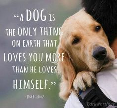 """""""A dog is the only thing on earth that loves you more than he loves himself.""""    #PuppyLove #MansBestFriend"""