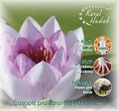 Karel Hadek Aromatherapy, Shops, Tableware, Plants, Tents, Dinnerware, Aroma Therapy, Tablewares, Retail