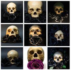 Image of Skull & Roses References (Digital Downloads)
