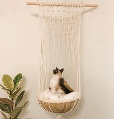 One of a kind handmade macrame cat bed. Black & white rope, coral or natural cot… ) ) One of a kind handmade macrame cat bed. Black & white rope, coral or natural cot…and pets hot calendar 2018 october malayalam, and pets zodiac movie trailer, pe Crazy Cat Lady, Crazy Cats, Cat Room, Pet Furniture, Cheap Furniture, Discount Furniture, Macrame Design, Diy Stuffed Animals, Diy Home Decor