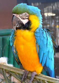 Na, bin ich nicht ein bunter Vogel?  Und sprechen kann ich auch! Erzähle davon in deinem Reisetagebuch mit Videos, Audios und Bildern Well, am I not a colorful bird? And I can talk too! Tell them in your moby.cards travel diary with pictures videos, etc. QR-Code
