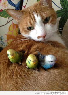 Cat & Budgies