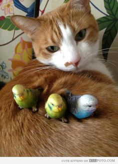 Little bird friends - Cute cat posing with little birds sitting on her back.*