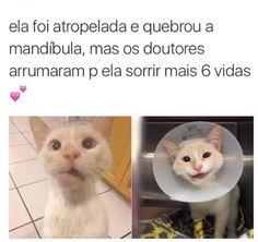 66 Ideas for memes sad cat Cute Cats, Funny Cats, Funny Animals, Cute Animals, Memes Amor, Sad Cat, Funny Memes, Jokes, Cat Memes