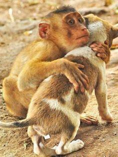 #animals# #best friend#