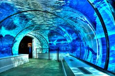 I need to visit this place. Polar Bear and Seal Underwater Tunnel, Detroit Zoo, Michigan photo via shannonsayss
