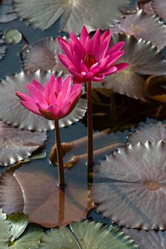 flower - Google-Suche