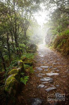 Rocky Trail In The Foggy Forest Photograph by Carlos Caetano