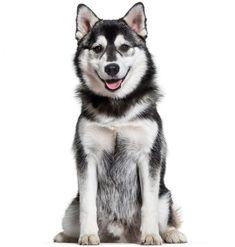 93 Best Dog Breeds images in 2019