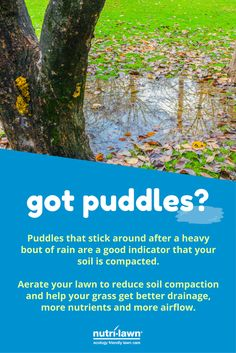 Puddles that stick around after a heavy bout of rain are a good indicator that your soil is compacted. Aerate your lawn to reduce soil compaction and help your grass get better drainage, more nutrients and more airflow.  Click to learn more about Core Aeration.