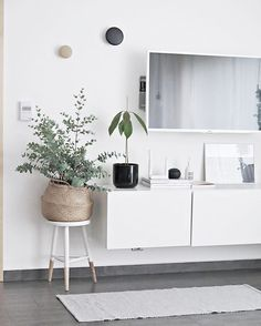 And it's still growing... I'm so happy GM to all #loveplants #ilovemyinterior #scandinavianhome #scandinaviandesign #whiteinterior #ssevjen #minimalism #bolig #boligpluss #deco #styling #interior_and_living #interiordecor #interiør #interior123 #interior4inspo #skandinaviskehjem #instadaily #interiorwarrior #interiorforinspo #decoration #styling #simplicity #interiør #myhome #instahome #mynordicroom #finahem #nordicinspiration #interior #onlyinterior