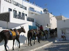 You can ride donkeys to the top of the village at Santorini Best Key West Hotels, Donkeys, Travel Deals, Best Memories, Hotel Reviews, Santorini, Picture Photo, Travel Photos, Greece