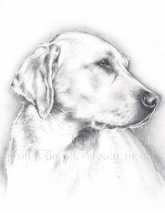 Yellow Labrador Pencil Drawing, Pet Portrait Commissions Taken. Fine Art Giclee prints available