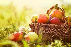 Jedzenie Jesień Pięć Przemian