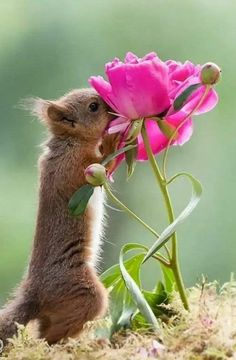 Happy Animals, Nature Animals, Cute Funny Animals, Cute Baby Animals, Animals And Pets, Funny Squirrel Pictures, Cute Animal Pictures, Beautiful Creatures, Animals Beautiful