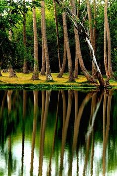 Reflection, Reunion Island If You Like this Like Our Page : https://www.facebook.com/pateltravelcom