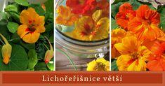 Kdybyste měli mít za oknem v truhlíku nebo na zahradě jen jednu kvetoucí bylinku, ať je to právě lichořeřišnice. Nádherná rostlina, která celé léto hýří barvami, je nenáročná na pěstování a má vynikající hojivé účinky. Glass Vase, Garden, Painting, Decor, Garten, Decoration, Lawn And Garden, Painting Art, Gardens