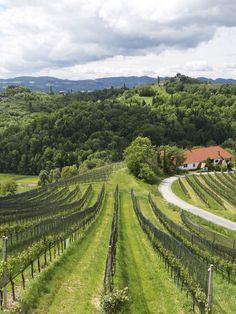 Ausblick in den Weingarten, Südsteiermark // View into the vineyards, South Styria Den, Vineyard, Wellness, Holiday, Outdoor, Patio, Vacation, Outdoors, Vacations
